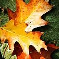 Autumn Blaze by JAMART Photography