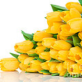 Beautiful Yellow Tulips Valentine by Boon Mee