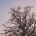 Bergen  Winter Tree by Hakon Soreide
