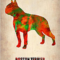 Boston Terrier Poster by Naxart Studio