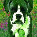 Boxer 20130126v3 by Wingsdomain Art and Photography
