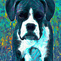 Boxer 20130126v4 by Wingsdomain Art and Photography