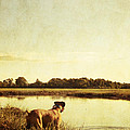 Boxer Dog By The Pond At Sunset by Stephanie McDowell