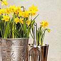 Buckets Of Daffodils by Amanda Elwell
