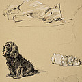 Bull-terrier, Spaniel And Sealyhams by Cecil Charles Windsor Aldin