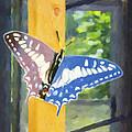 Butterfly 1 by Jeelan Clark