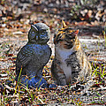 Calico Cat And Obtuse Owl by Al Powell Photography USA
