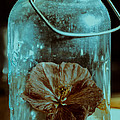 Canned Spring by Susan Capuano