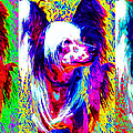 Chinese Crested Dog Three 20130125 by Wingsdomain Art and Photography