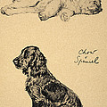 Chow And Spaniel, 1930, Illustrations by Cecil Charles Windsor Aldin