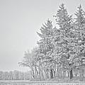 Cold Lace by Odd Jeppesen