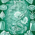Collection Of Teleostei by Ernst Haeckel