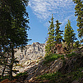 Colorado Mountain Hike by Michael J Bauer