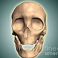 Conceptual Image Of Human Skull, Front by Stocktrek Images