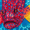 Coral Grouper by Daniel Jean-Baptiste