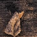 Crystal Leaf by Anne Gilbert