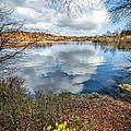 Daffodil Lake by Adrian Evans