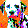 Dalmation Dog 20130125v2 by Wingsdomain Art and Photography