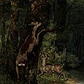 Deer In The Forest by Gustave Courbet