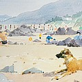 Dog On The Beach Woolacombe by Lucy Willis