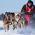 Dog Sledding Race by Mircea Costina Photography