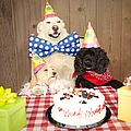 Doggy Birthday Party by Jan Tyler