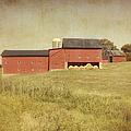 Down On The Farm by Kim Hojnacki