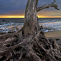 Driftwood On Jekyll Island by Debra and Dave Vanderlaan
