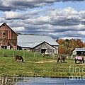 Fall At The Horse Farm by Deborah Benoit