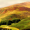 Find The Soul. Golden Hills Of Wicklow. Ireland by Jenny Rainbow