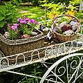 Flower Cart In Garden by Elena Elisseeva