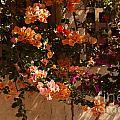 Flower Trellis In La Jolla by Anna Lisa Yoder