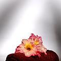 Flowers On Towel by Olivier Le Queinec