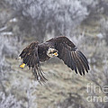 Flying Low by Mike  Dawson