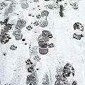 Footprints by Tom Gowanlock