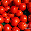 Fresh Ripe Red Tomatoes by Edward Fielding