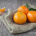 Fresh Tangerine by Sabino Parente