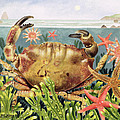Furrowed Crab With Starfish Underwater by EB Watts