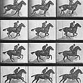 Galloping Horse by Eadweard Muybridge