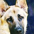 German Shepherd - Soul by Sharon Cummings