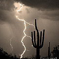 Giant Saguaro Cactus Lightning Strike Sepia  by James BO  Insogna