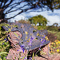 Gilcrease House Garden Flower by Tamyra Ayles