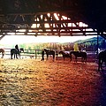 Glory In Horses by J Ferwerda