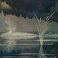 Golden Pond Lily by Bedros Awak