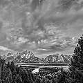 Gray Treetons by Jon Glaser