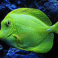 Green Fish by Wendy J St Christopher