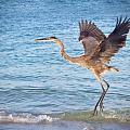 Heron Boca Grande Florida by Fizzy Image