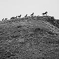 Horizon Horse by Paul Bartoszek