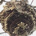 Hornet's Nest by Todd Sherlock