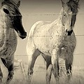 Horse Mysteries.. by Al  Swasey